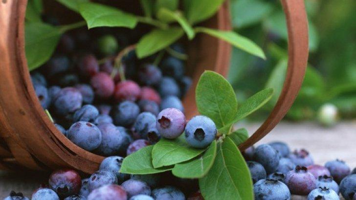 afinele - beneficii miraculoase pentru organism